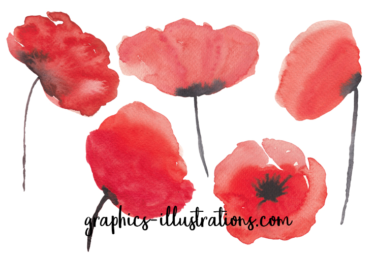 Watercolor Poppies Clip Art Set - 5 hi-res transparent PNG files - Free download!