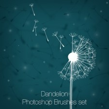 Dandelions Photoshop Brushes set