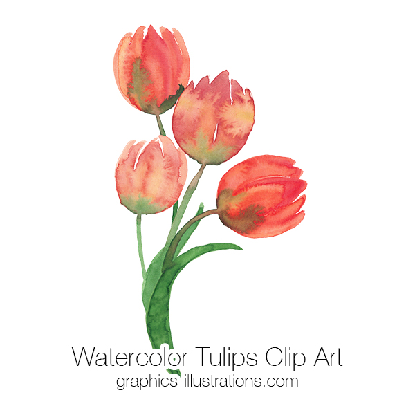 Watercolor Flowers, Watercolor Tulips Clip Art