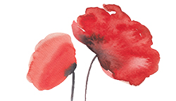 Free Watercolor Poppies Clip Art PNG