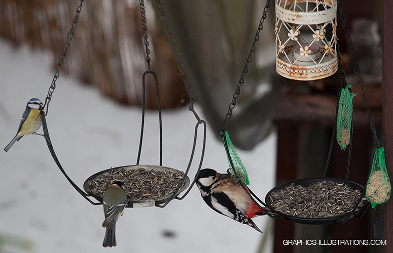 Feeding birds in Winter