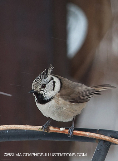 Winter Is Here. Therefore - Feed The Birds
